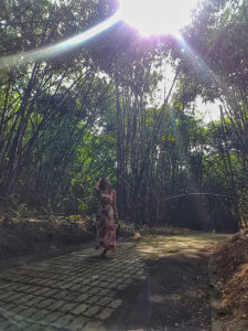 bamboo forest in Ubud